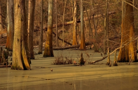 Cypress Pond, Mercer Arboretum, Houston, TX