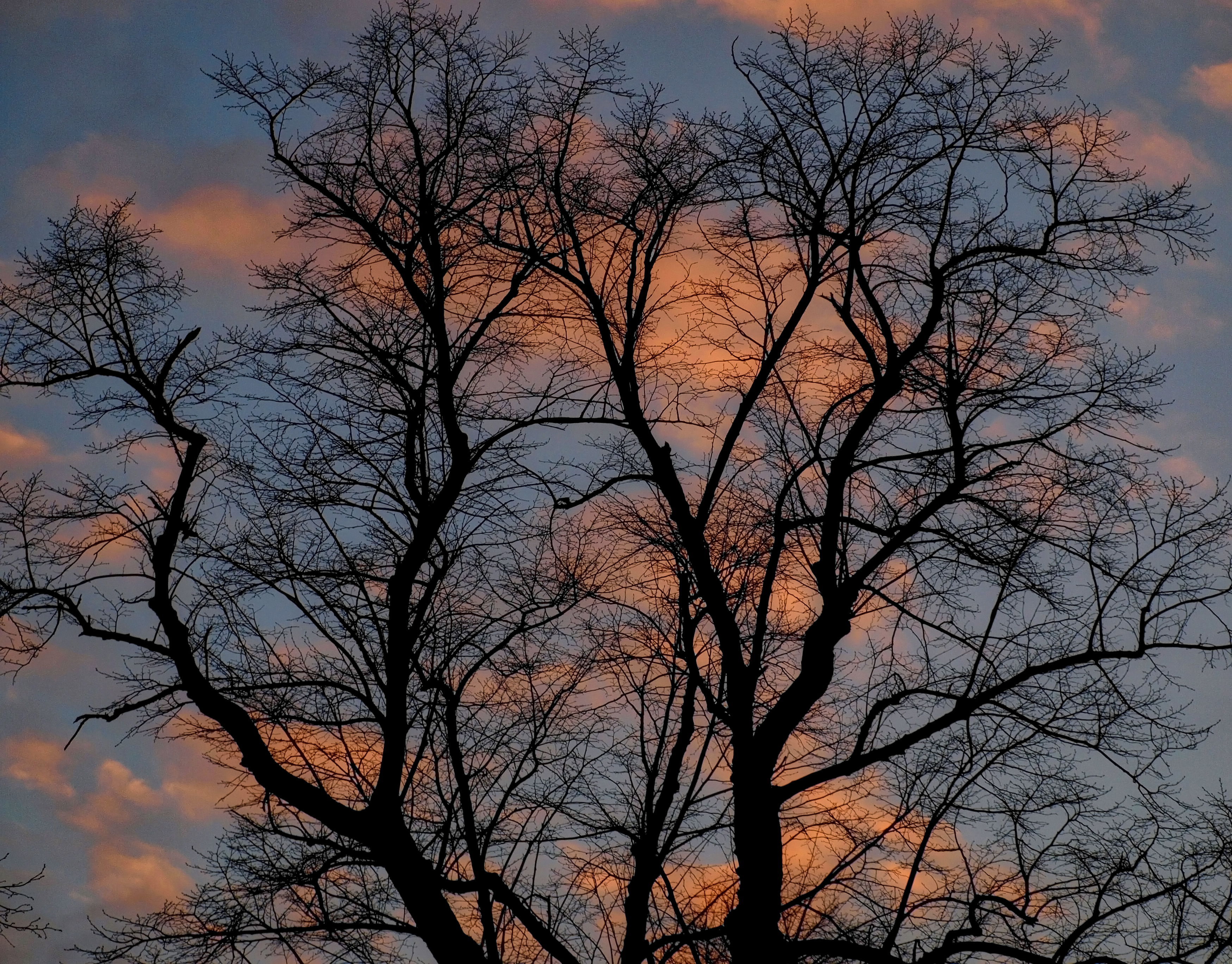 Silhouetted Tree, Hyde Park, London
